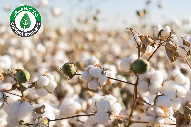 Coton 100 % Biologique Certifié ni Teint ni Blanchi